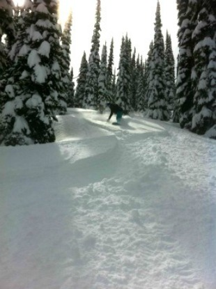 Tree boarding in Revelstoke