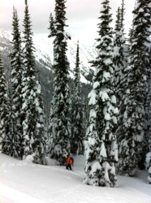 Tree skiing in Revelstoke