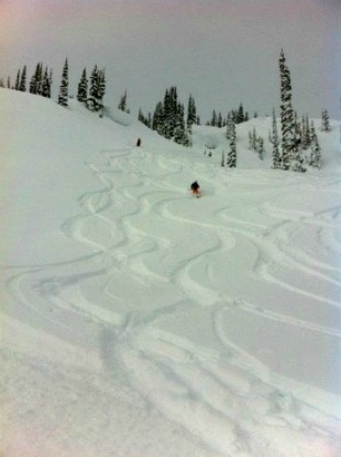 Powder tracks in Revelstoke