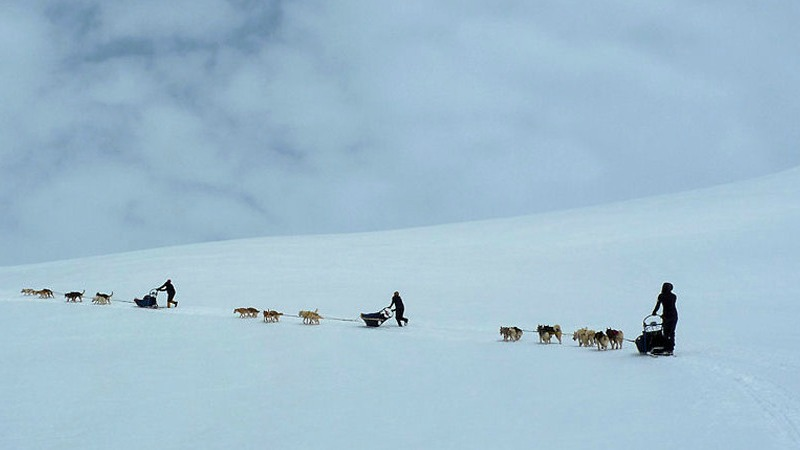 heli-skiing-in-chile-dog-sledding